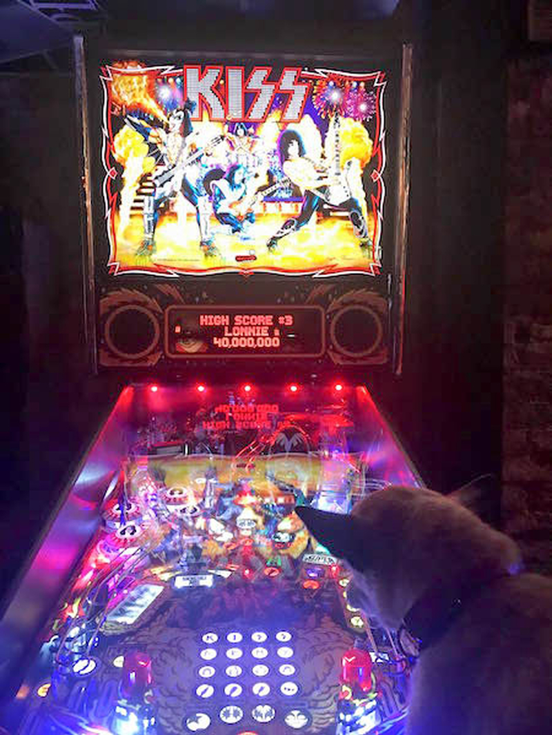 171207 Neil Sowerby Dog Bar Crawl Pinball Wizard