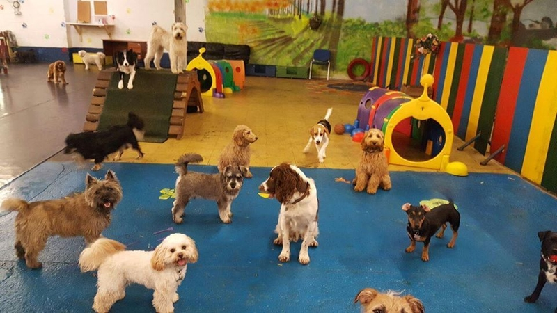 09 07 19 Daycare4Dogs