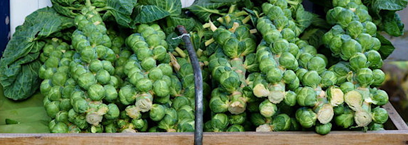 2019 11 26 Brussel Sprout Tops Copyright Peter Trimming
