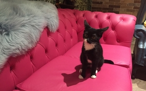 180323 Kitty Cafe Leeds Image8