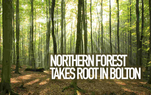 Northern Forest Header