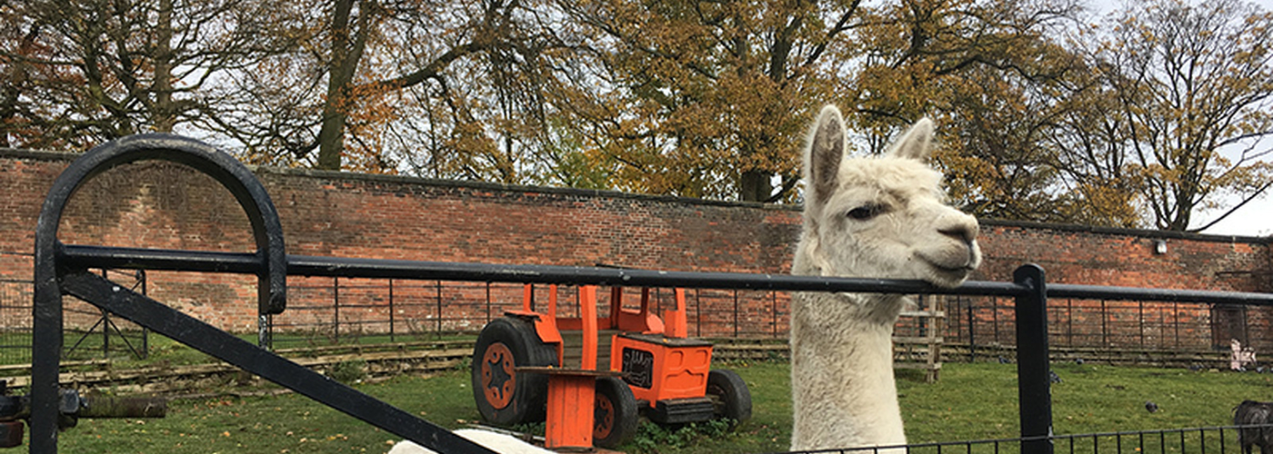 2018 11 20 Beyond The City Prestwich 2018 11 10 Heaton Park Animal Centre Alpaca