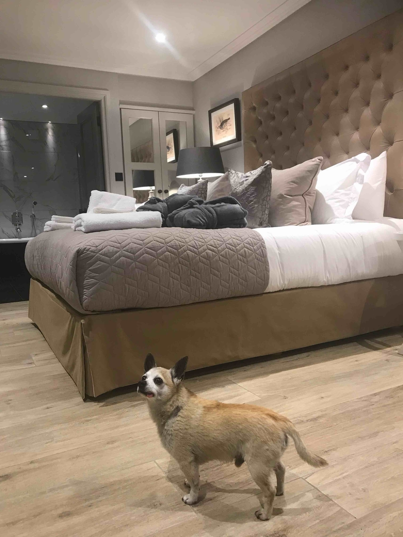 2019 08 20 Freemasons Wiswell Dog Friendly Partridge Room
