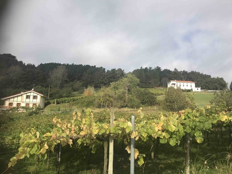 181130 Tzakoli Vineyards