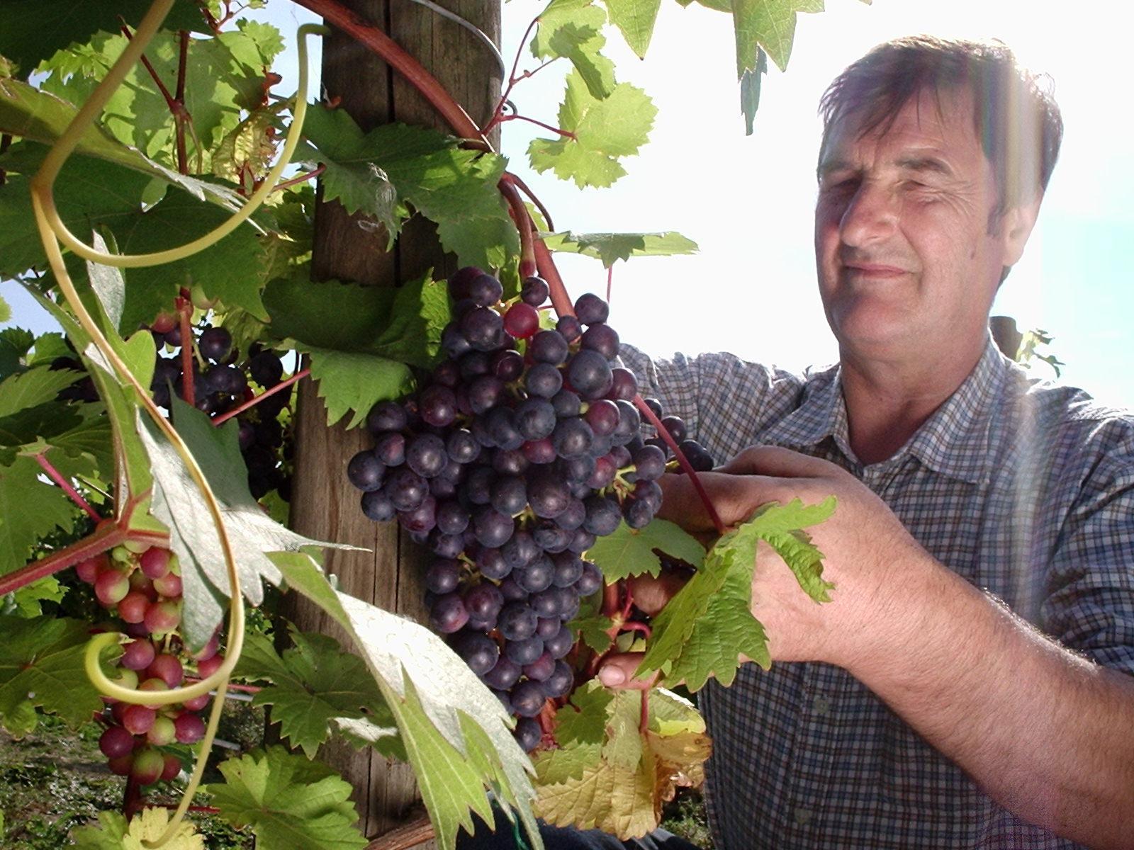 170303-Buy-Better-Wine-Leventhorpe.jpg#asset:287364