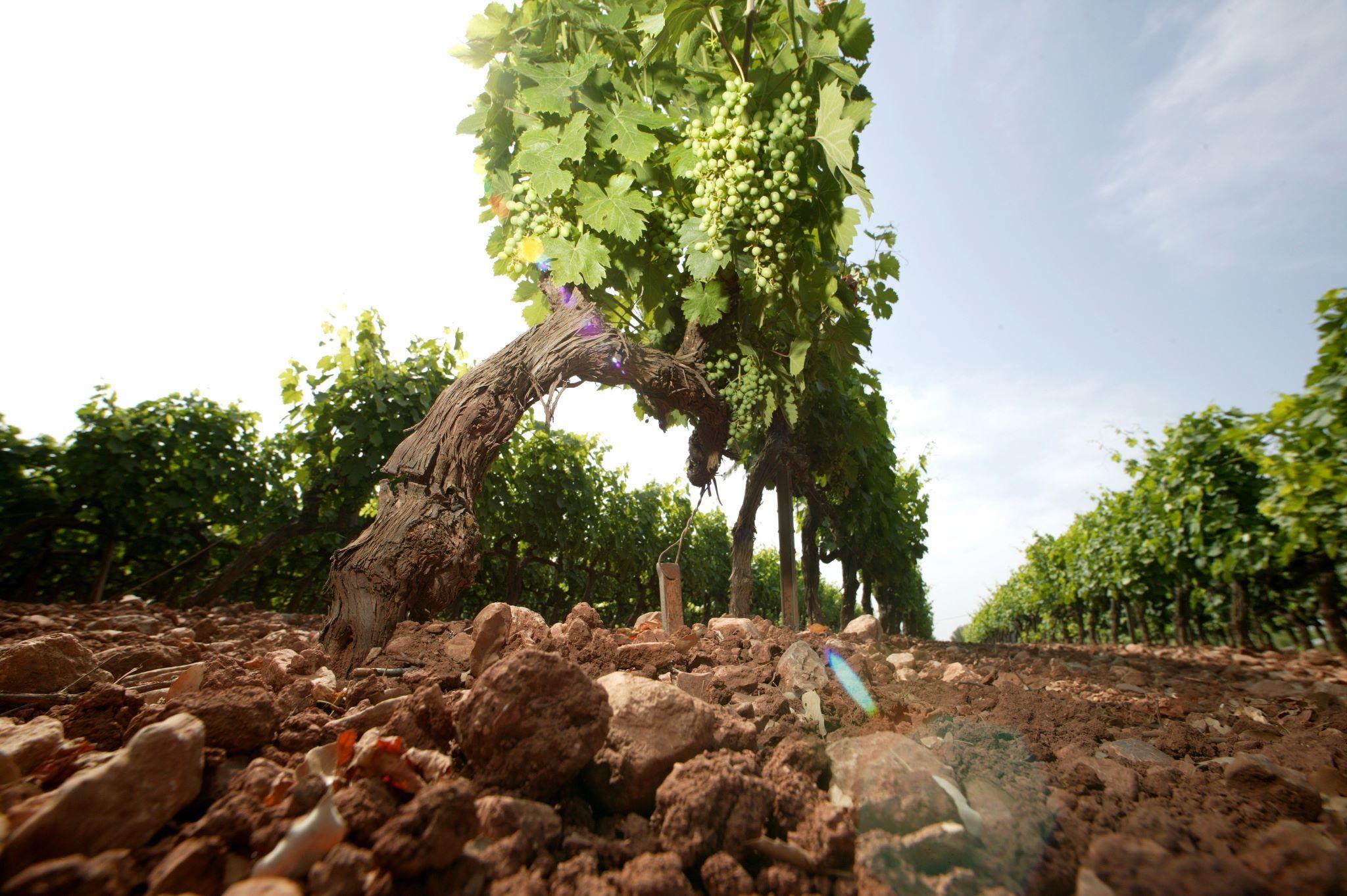170303-Buy-Better-Wine-Vineyard.jpg#asset:287367