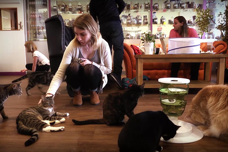 170407 Cat Cafe 2