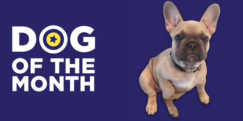 20181128 Dog Of The Month Confidentials Logo Lola 800