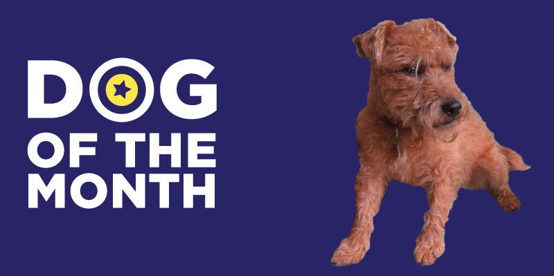 20181204 Dog Of The Month Scamp
