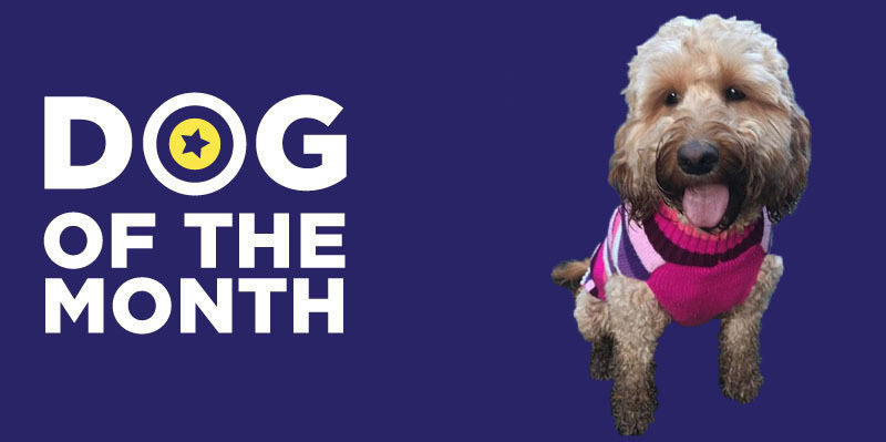 20190102 Dog Of The Month Betty