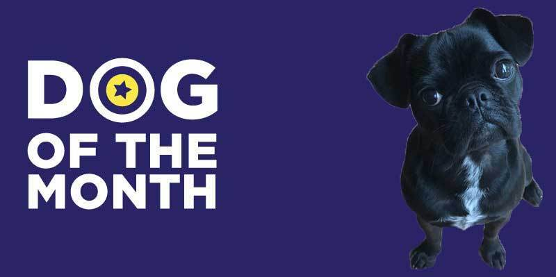 20190201 Dog Of The Month Goober