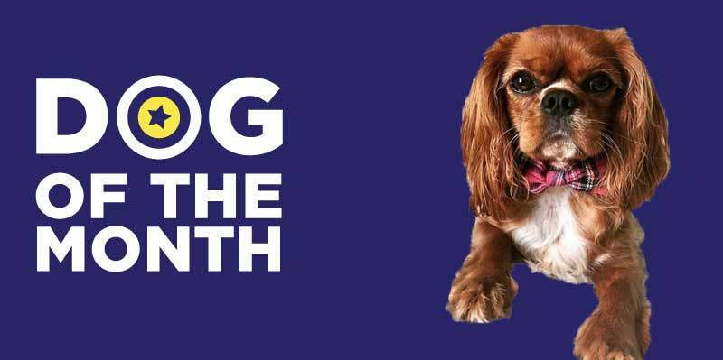 20190301 Dog Of The Month Ruby Betty