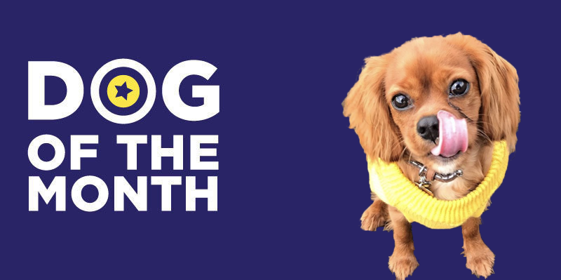 20190401 Dog Of The Month Willow