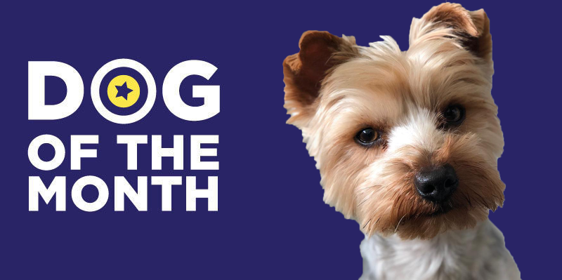 20190604 Dog Of The Month Leo