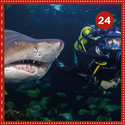 Win an Ultimate Shark Dive Experience for Beginners worth £250