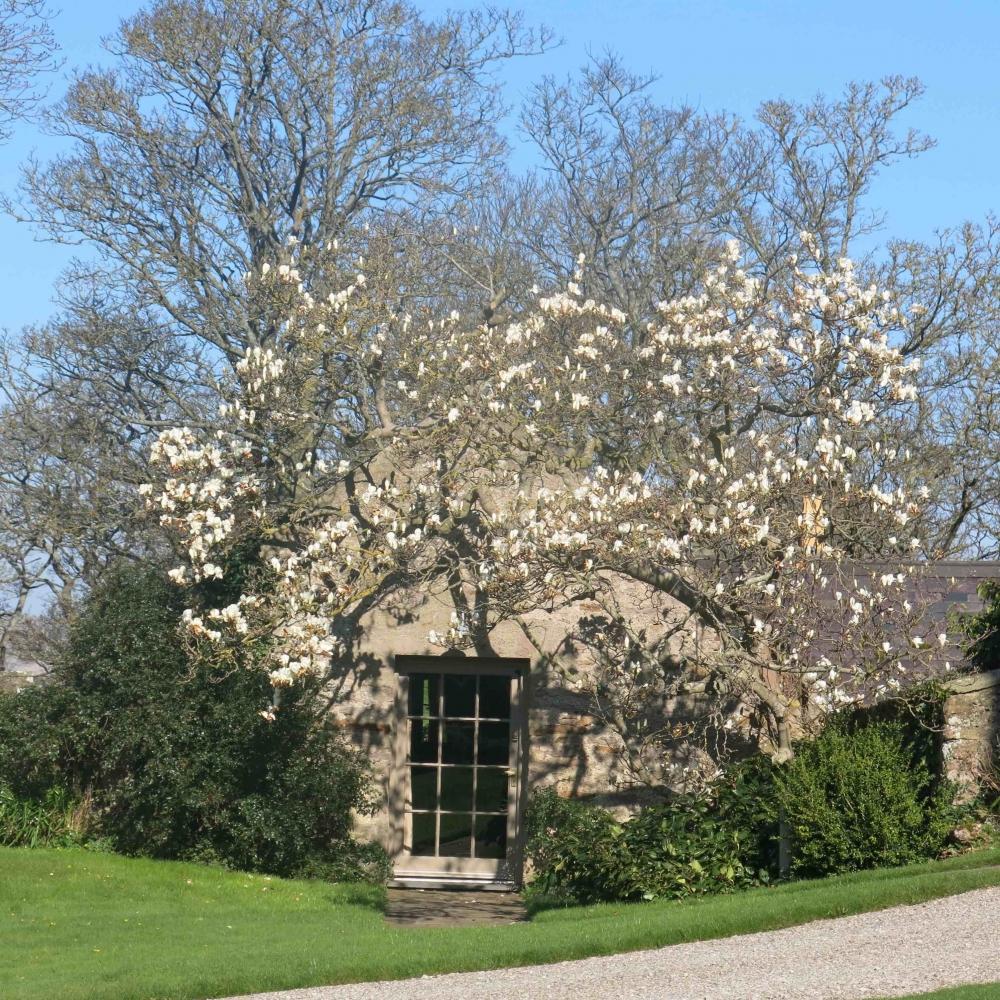 170419 Blossom