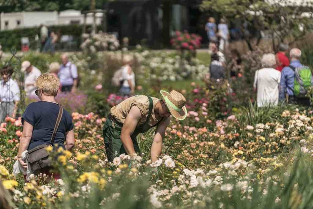170716 170716 Rose Garden By Dominik Butzmann