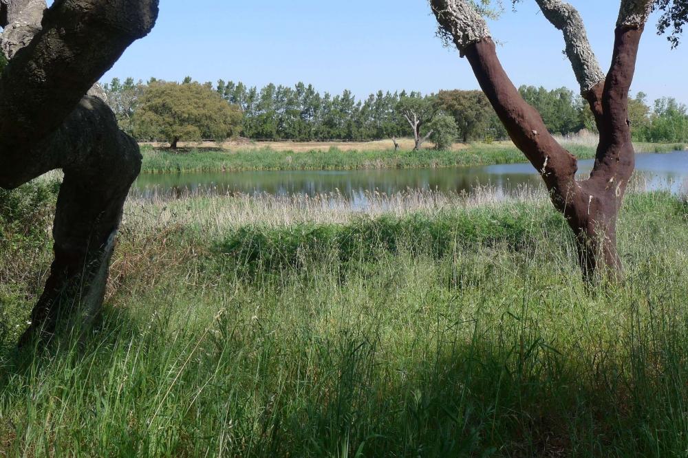 170529 Cork Woodland
