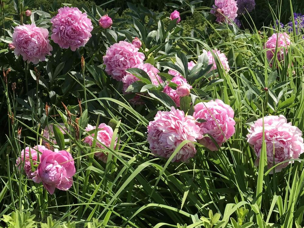 170716 Blooms