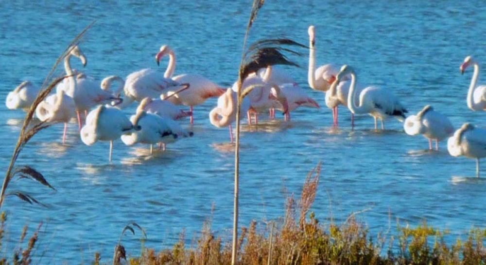 170823 Birds